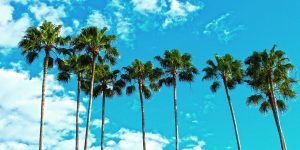 West Palm Beach Location